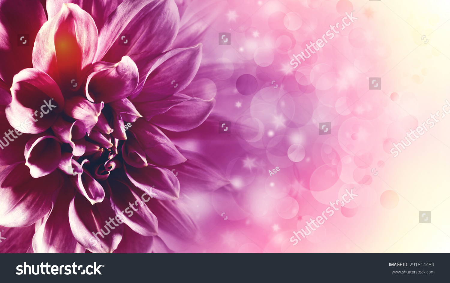 Beautiful Lotus Flower Abstract Floral Backgrounds Stock Photo