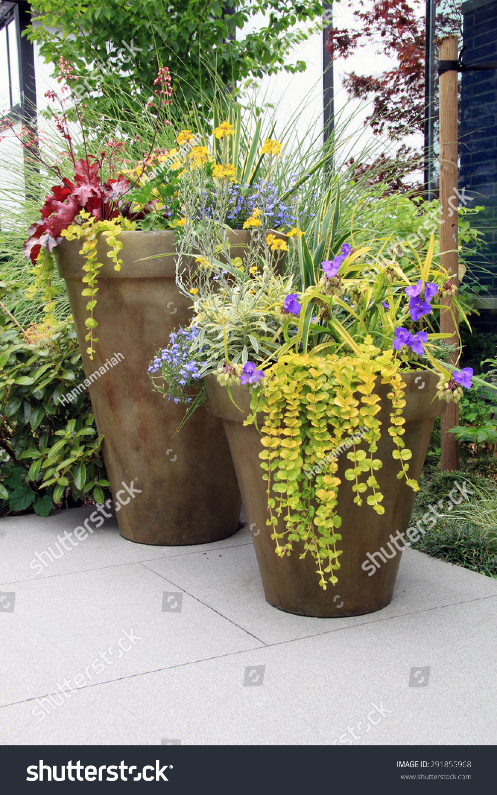 Two Large Containers Perennial Garden Flowers Stock Photo Edit Now