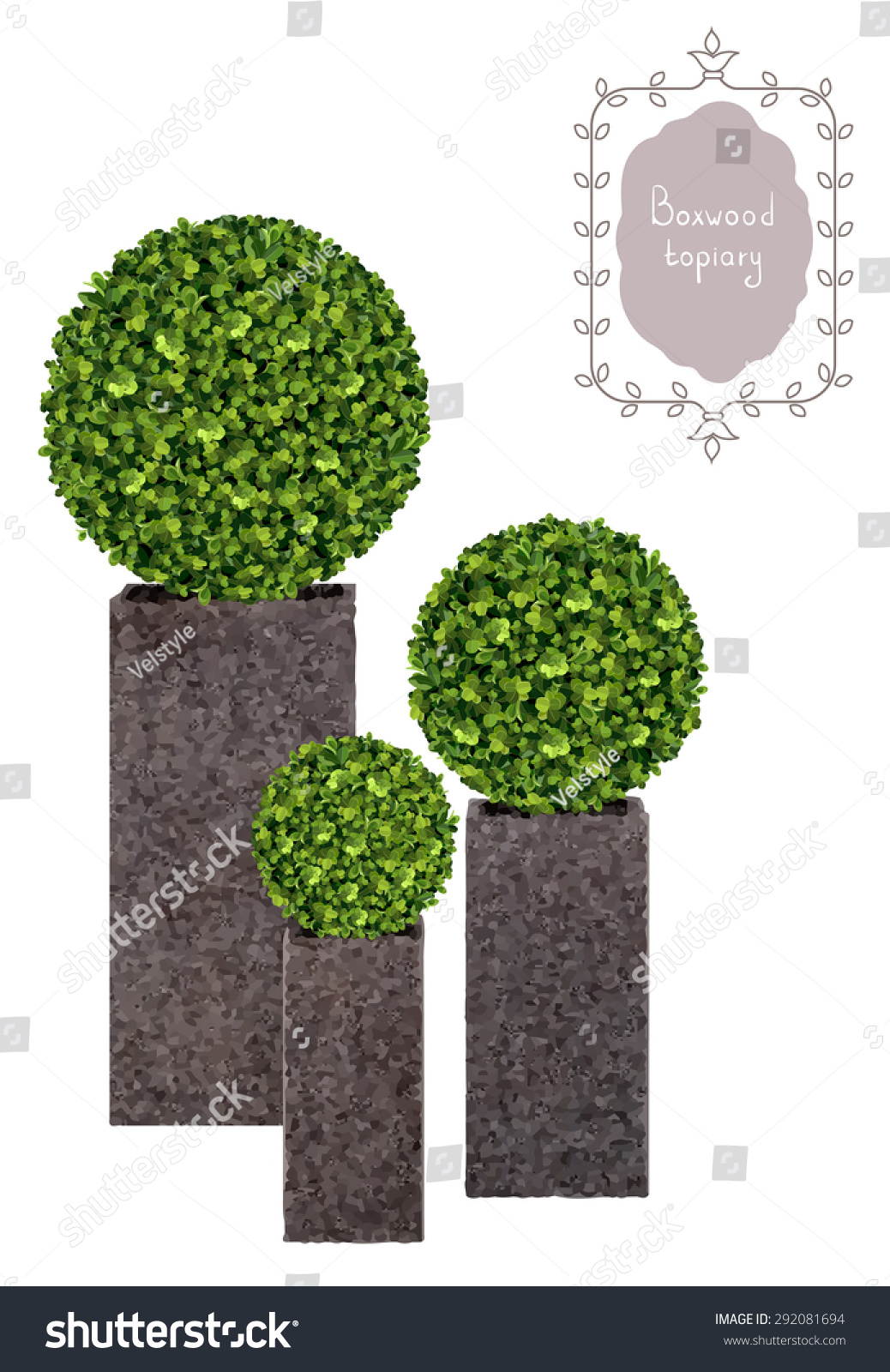 boxwood topiary garden plant vector background decorative trimming boxwood tree in flowerpot