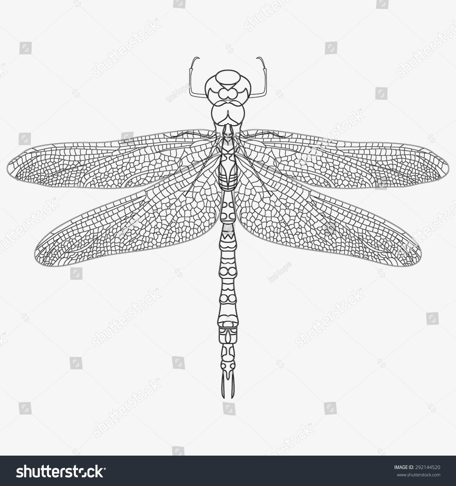 Coloring in dragonflies - Vector Dragonfly Isolate A Realistic Picture Of The Insect A Clear Outline Stylish