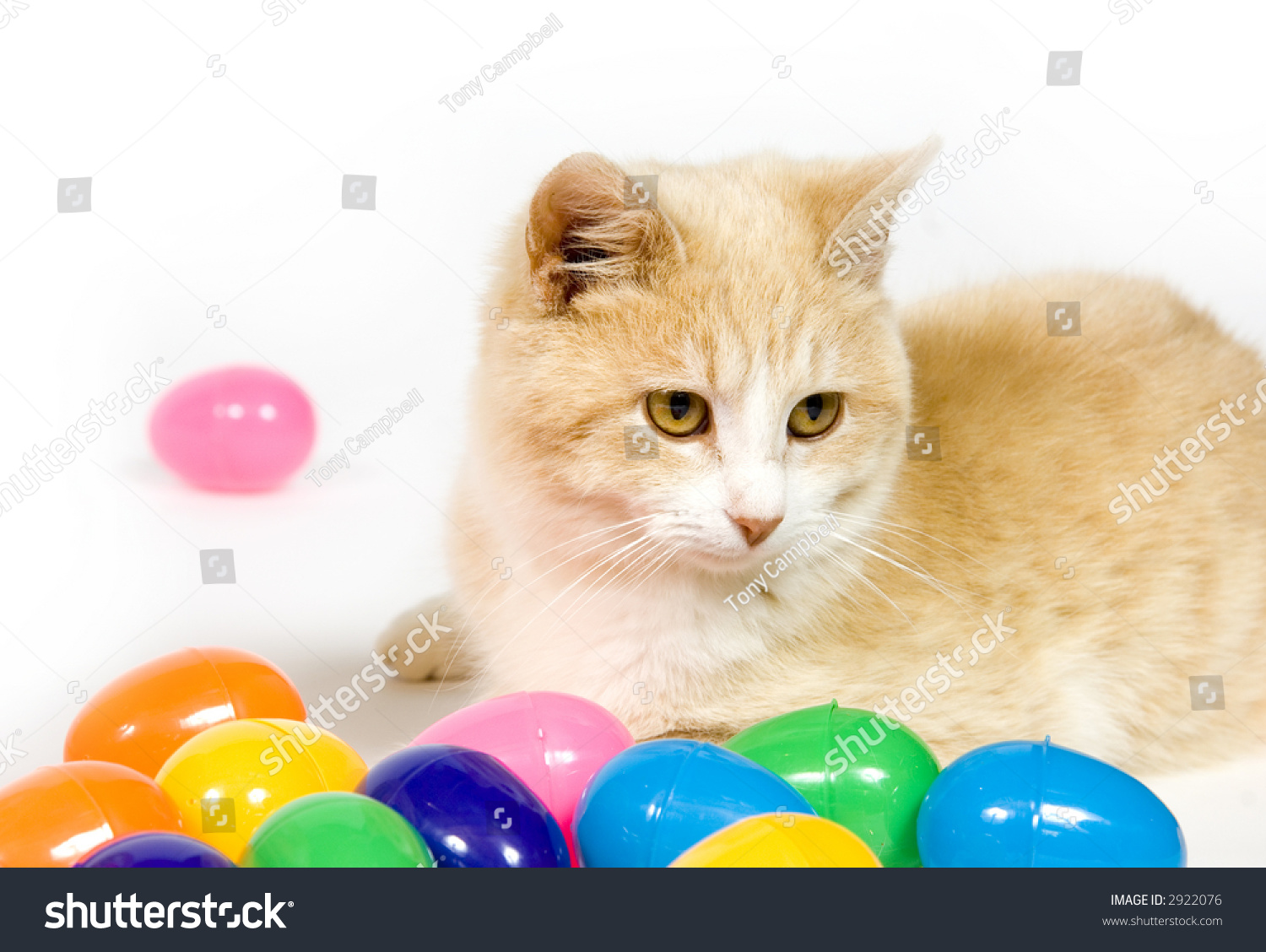 A Yellow Cat Sits Among Plastic Easter Eggs On White Background