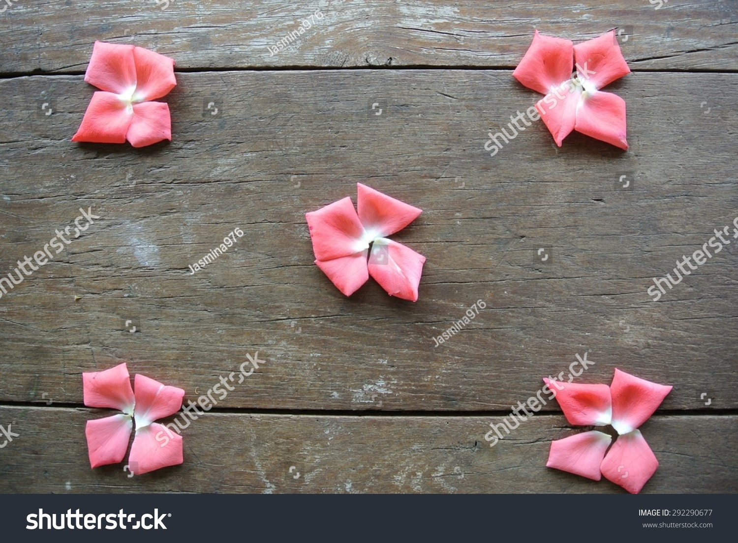 Pink Rose Petals Shape Small Flowers Stock Photo Edit Now