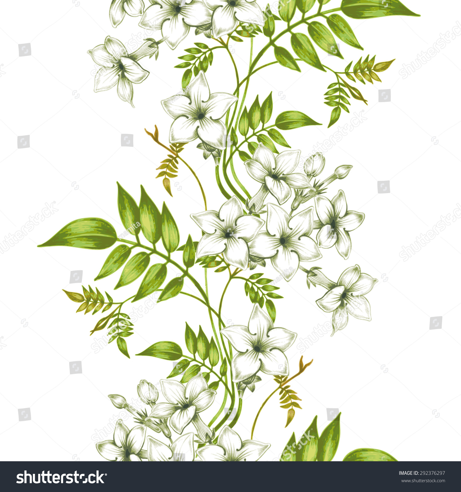 Vector Seamless Background Jasmine Flowersdesign Fabrics