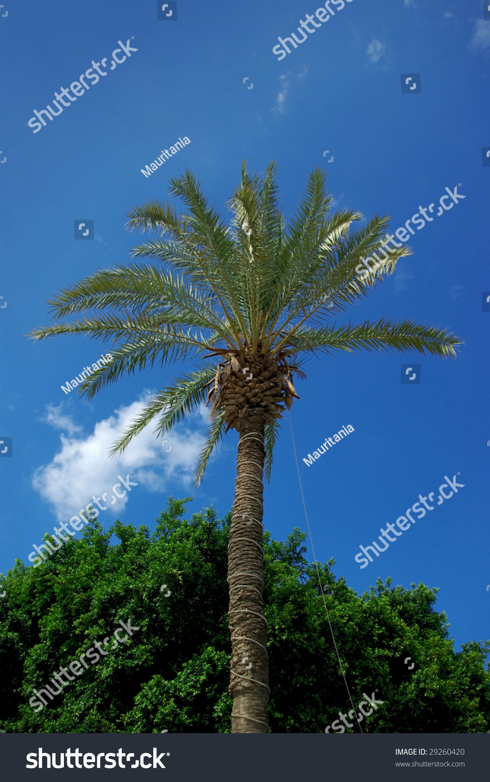 trees palm blue - photo #48