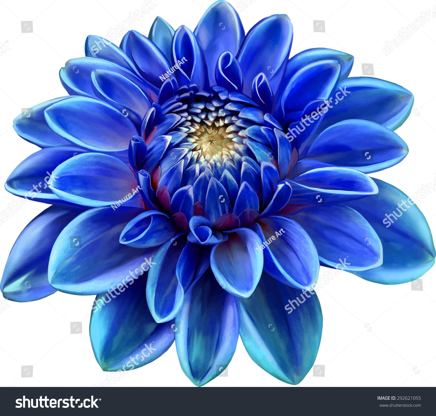 Blue Colored Dahlia Flower Isolated On Stock Vector Royalty Free