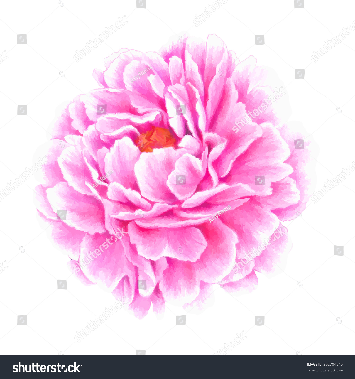 Peony flower isolated on white stock vector 368014568 shutterstock - Peony Flower Stock Images Royalty Free Images Vectors