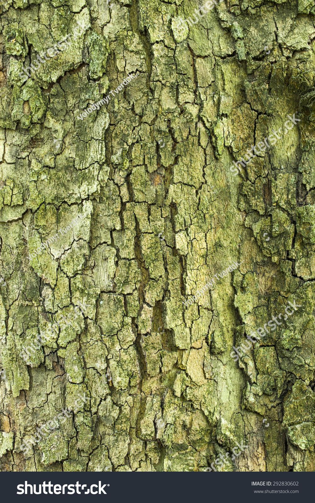Green Tree Bark Texture Stock Photo (Royalty Free) 292830602 ...