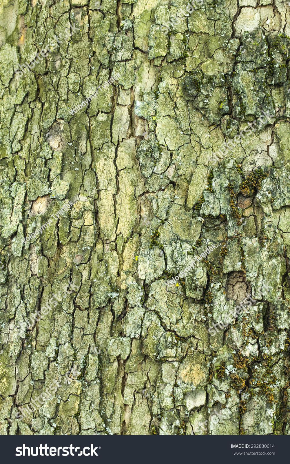 Dry Old Cracked Mossy Tree Bark Stock Photo & Image (Royalty-Free ...