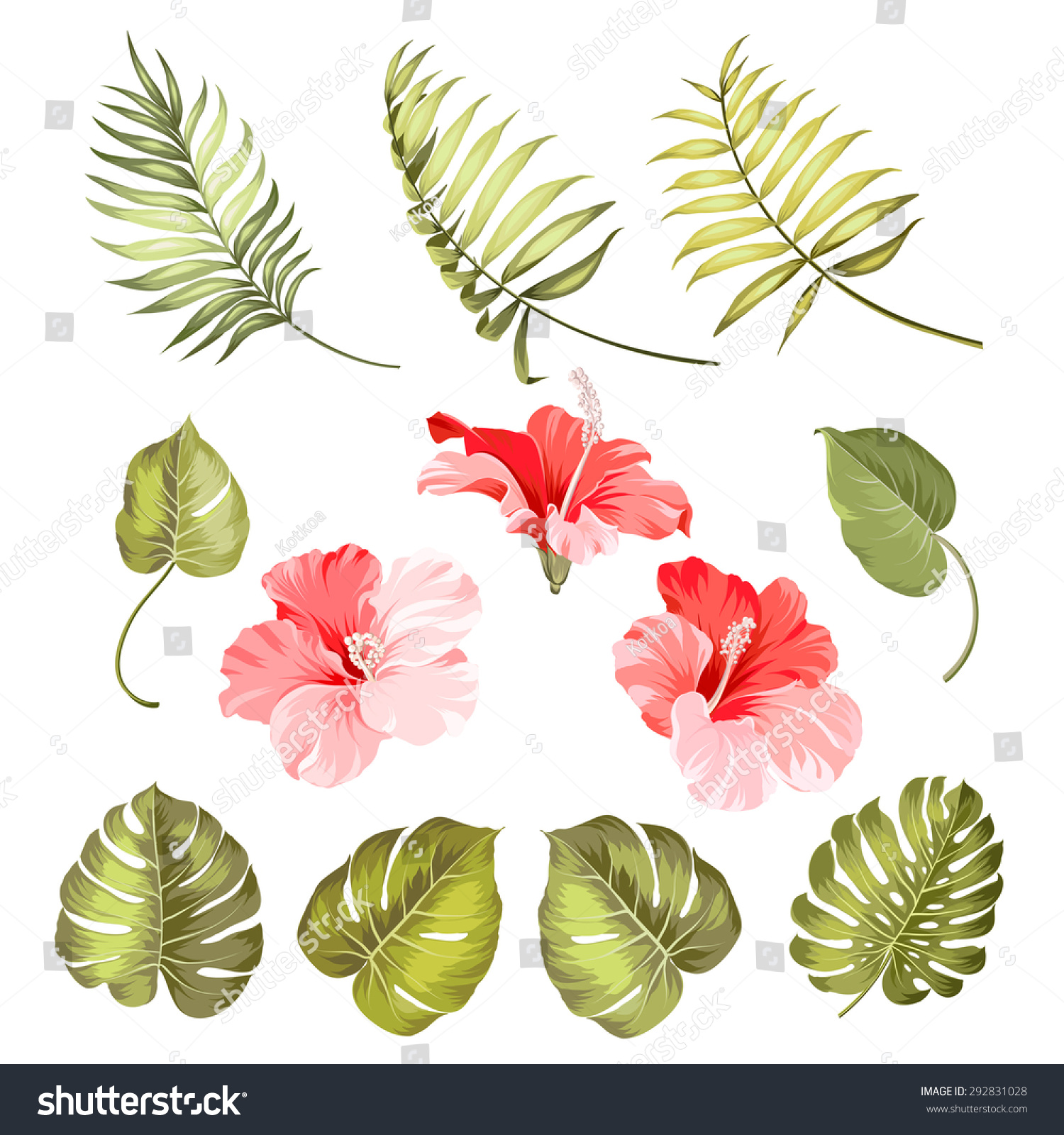 Set Of Hibiscus Tropical Flower Parts Over White Background Vector