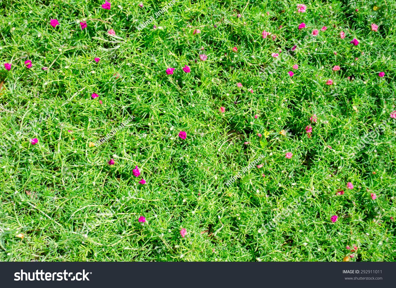 Green Grass Texture Pink Flowers Stock Photo Edit Now 292911011