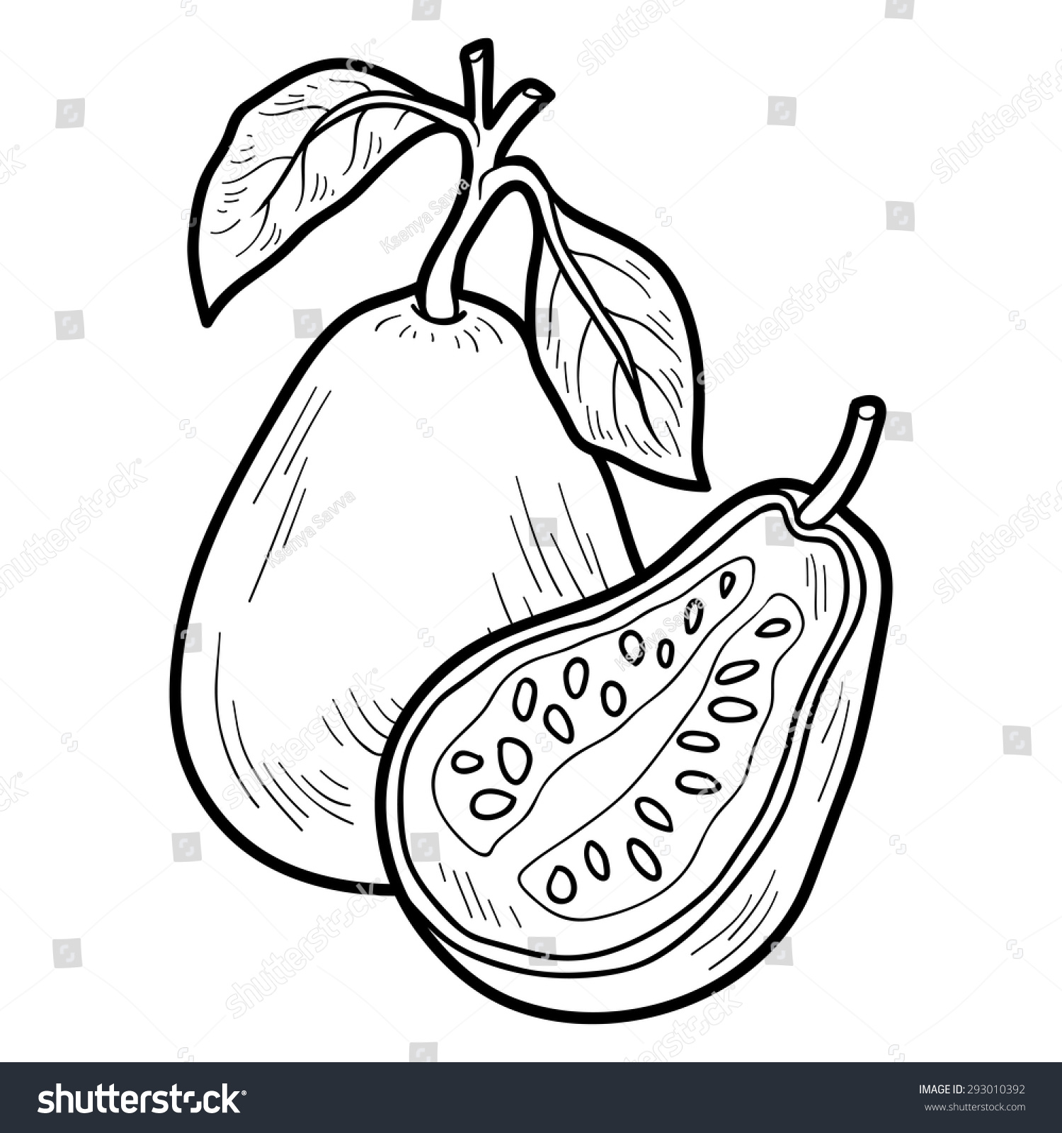 Coloring Book Fruits Vegetables Guava Stock Vector Royalty Free