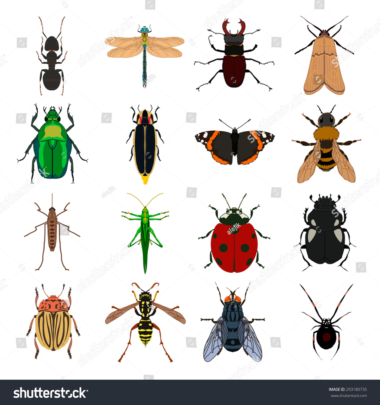 Worksheet Butterfly Beetle insect vector set butterfly wasp tick stock 293180735 ant dragonfly beetle