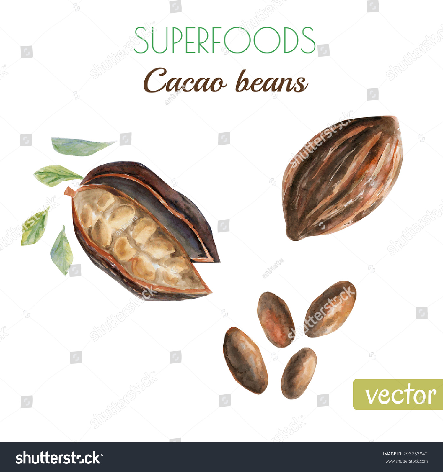vector watercolor illustration super food raw stock vector 293253842 shutterstock Whole Foods Online Organic Whole Foods