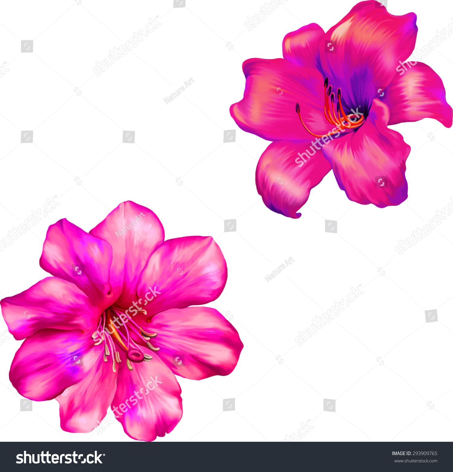 Vector Illustration Beautiful Pink Lily Flower Stock Vector Royalty