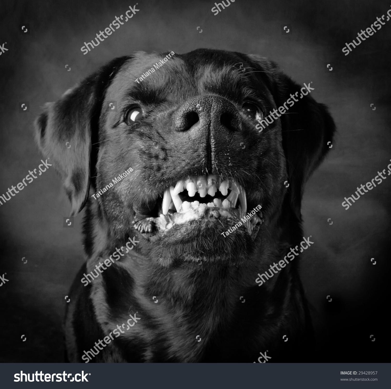 Rottweiler girl
