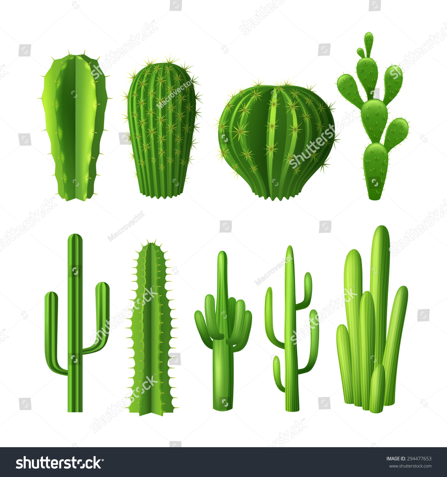 different types cactus plants realistic decorative stock vector 294477653 shutterstock. Black Bedroom Furniture Sets. Home Design Ideas
