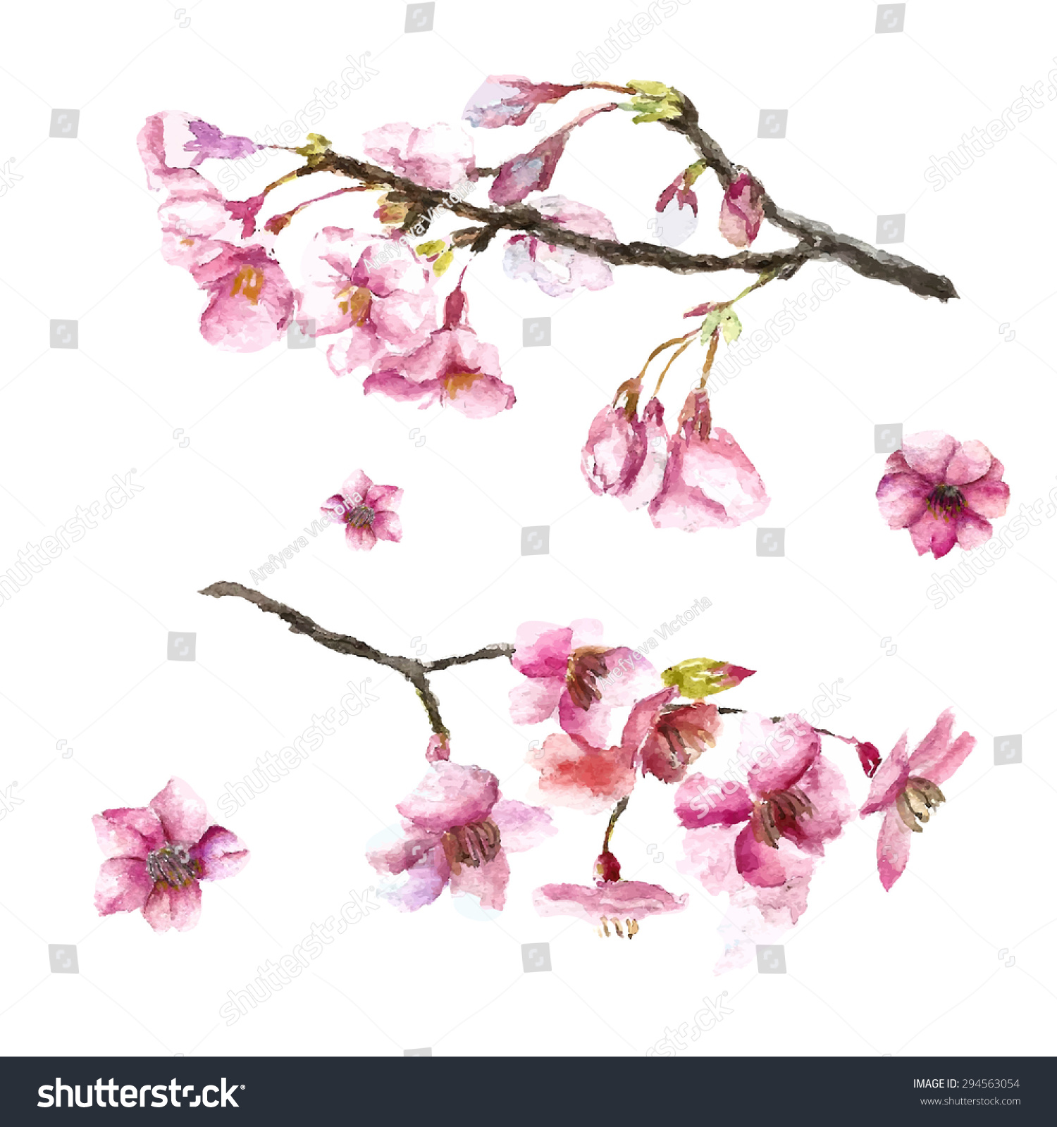 watercolor cherry blossom hand draw cherry blossom sakura branch and flowers vector illustrations