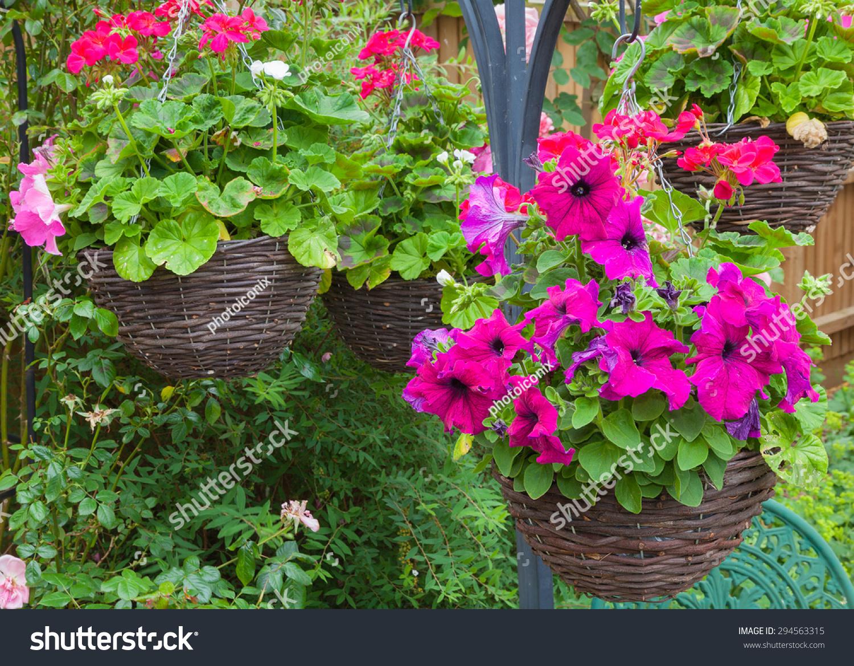 Beautiful Hanging Baskets Purple Petunias Stock Photo Edit Now
