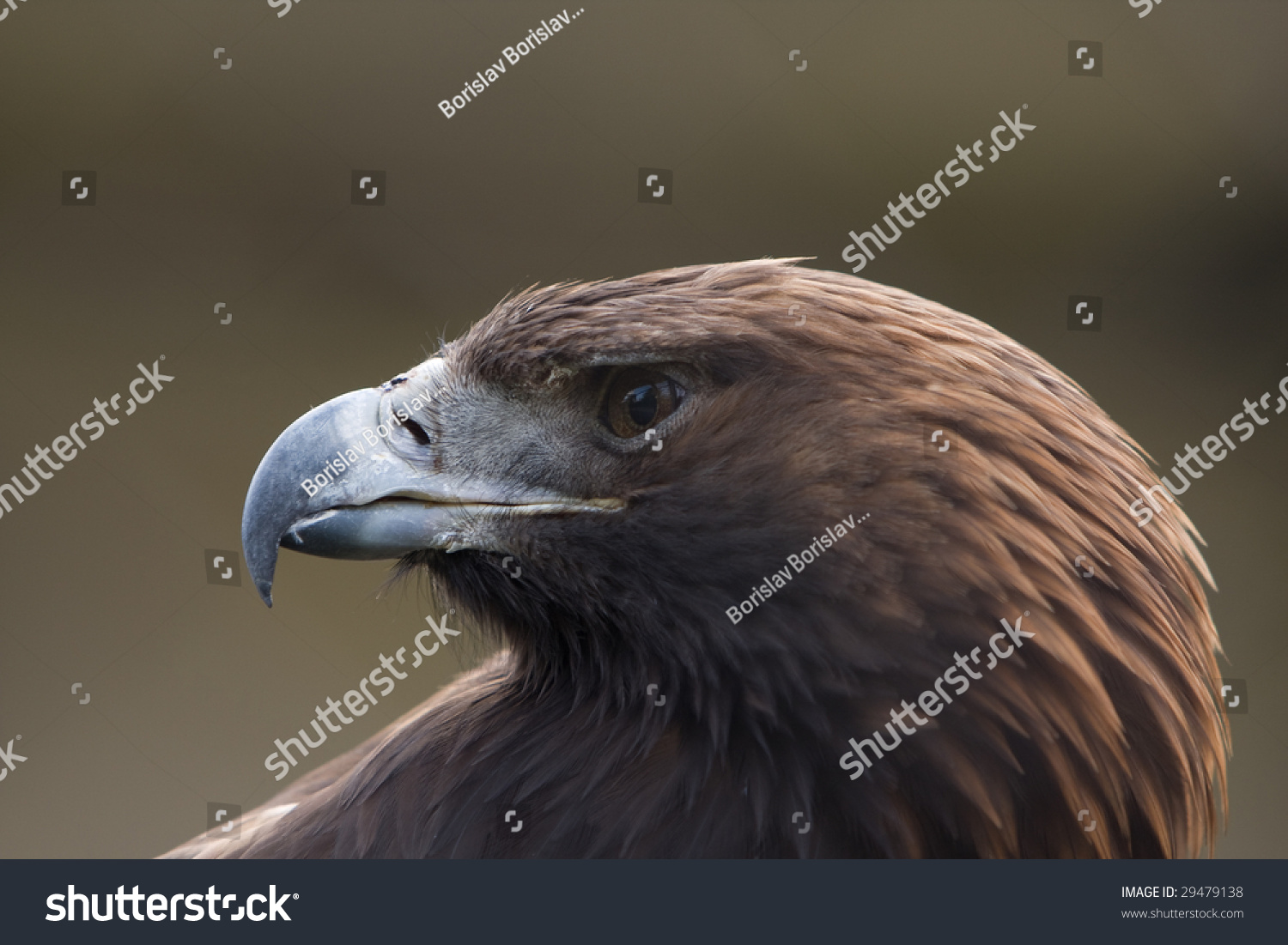 Golden Eagle Symbol Of Power And Freedom Ez Canvas