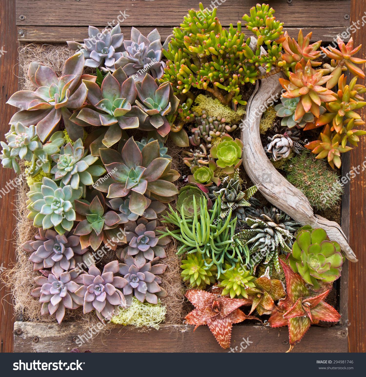 Vertical Garden Succulents Wooden Planter Box Stock Photo (Royalty ...