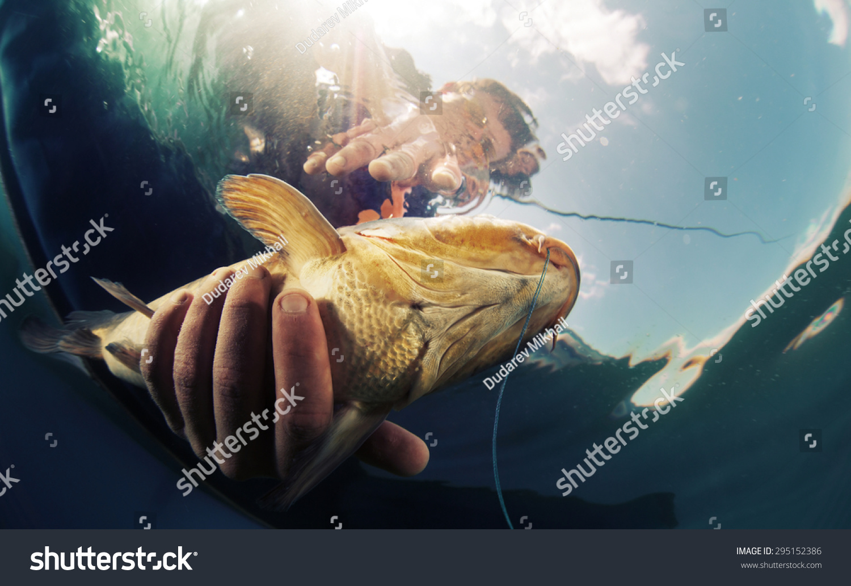 Большая рыба во сне для женщины