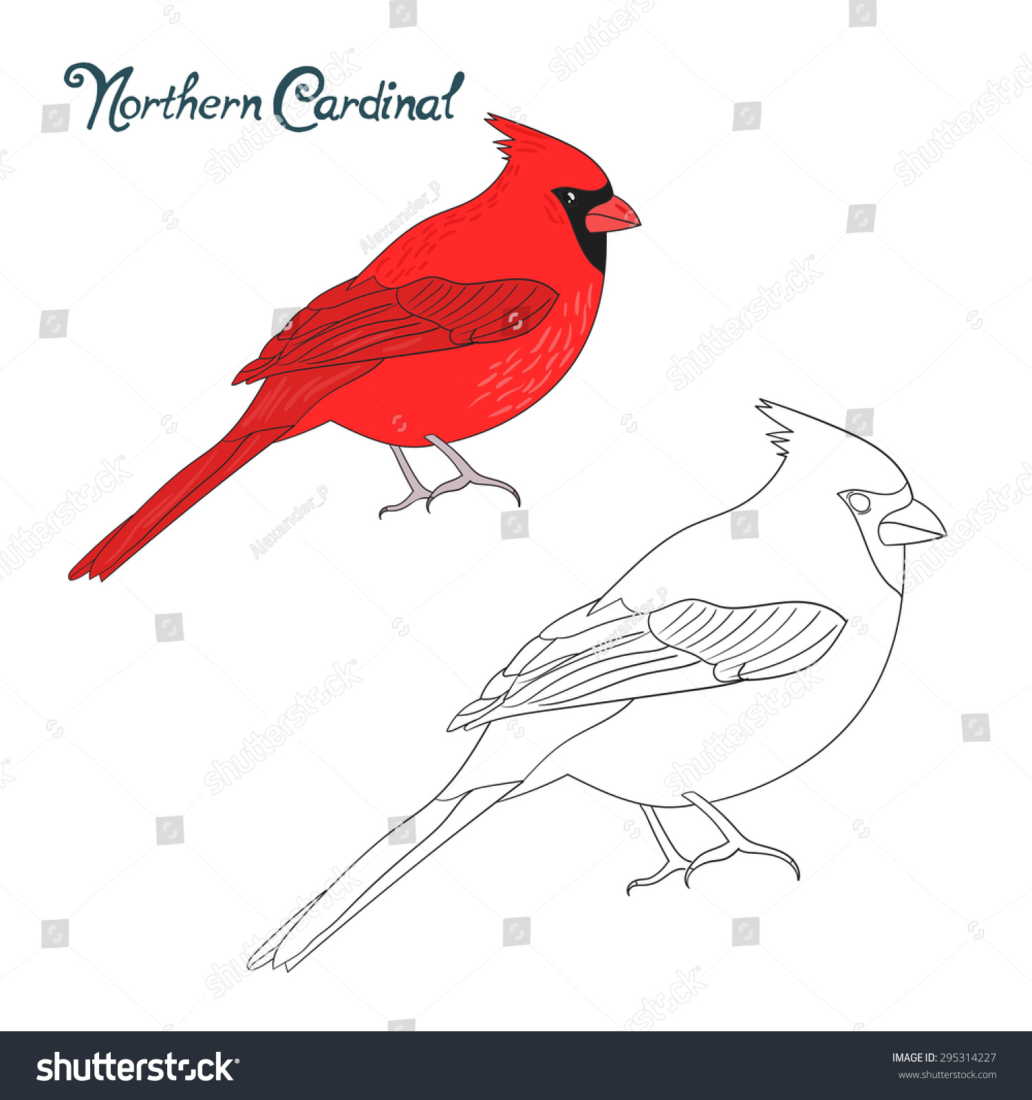 Educational Game Coloring Book Northern Cardinal Bird Raster Version