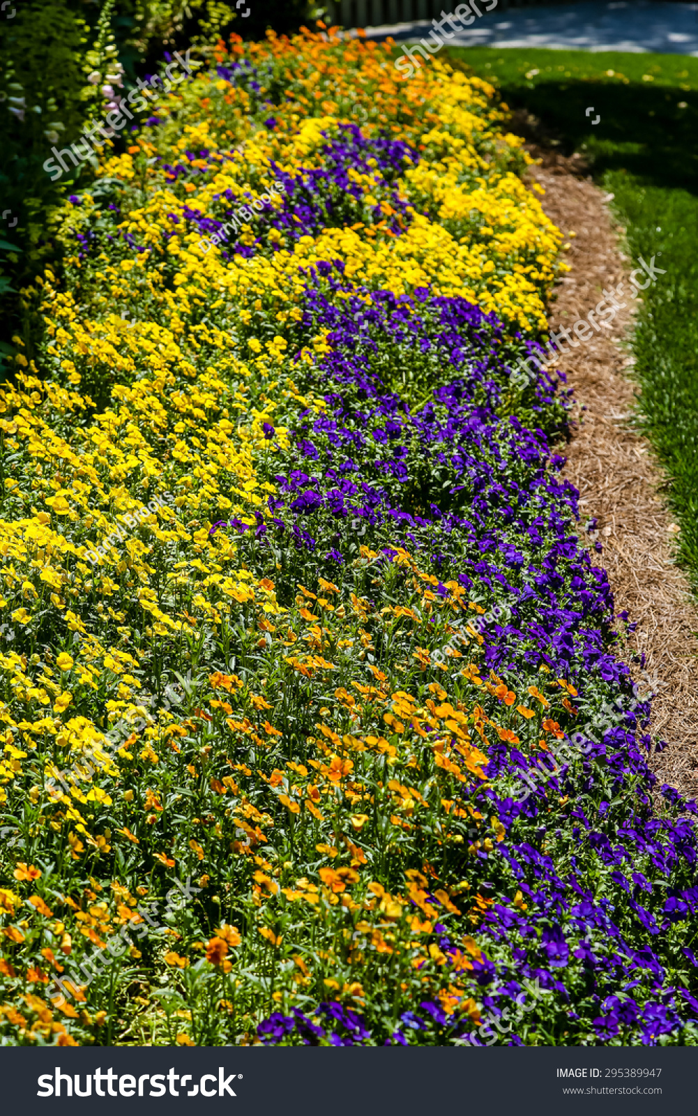Bed Orange Yellow Purple Flowers Garden Stock Photo Edit Now