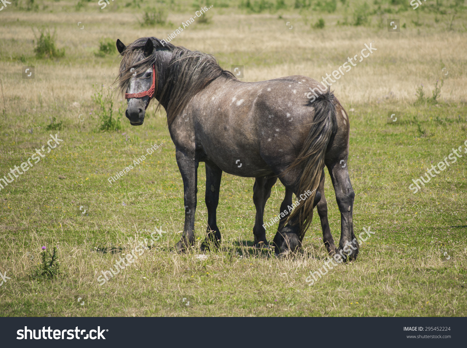 Beautiful Horse Taking Care Her Baby Stock Photo Edit Now 295452224