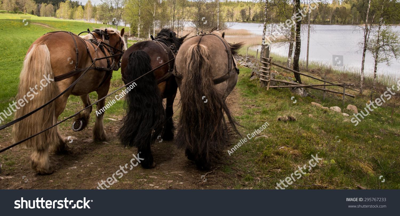 North Swedish Draft Horses Work Stock Photo Edit Now 295767233