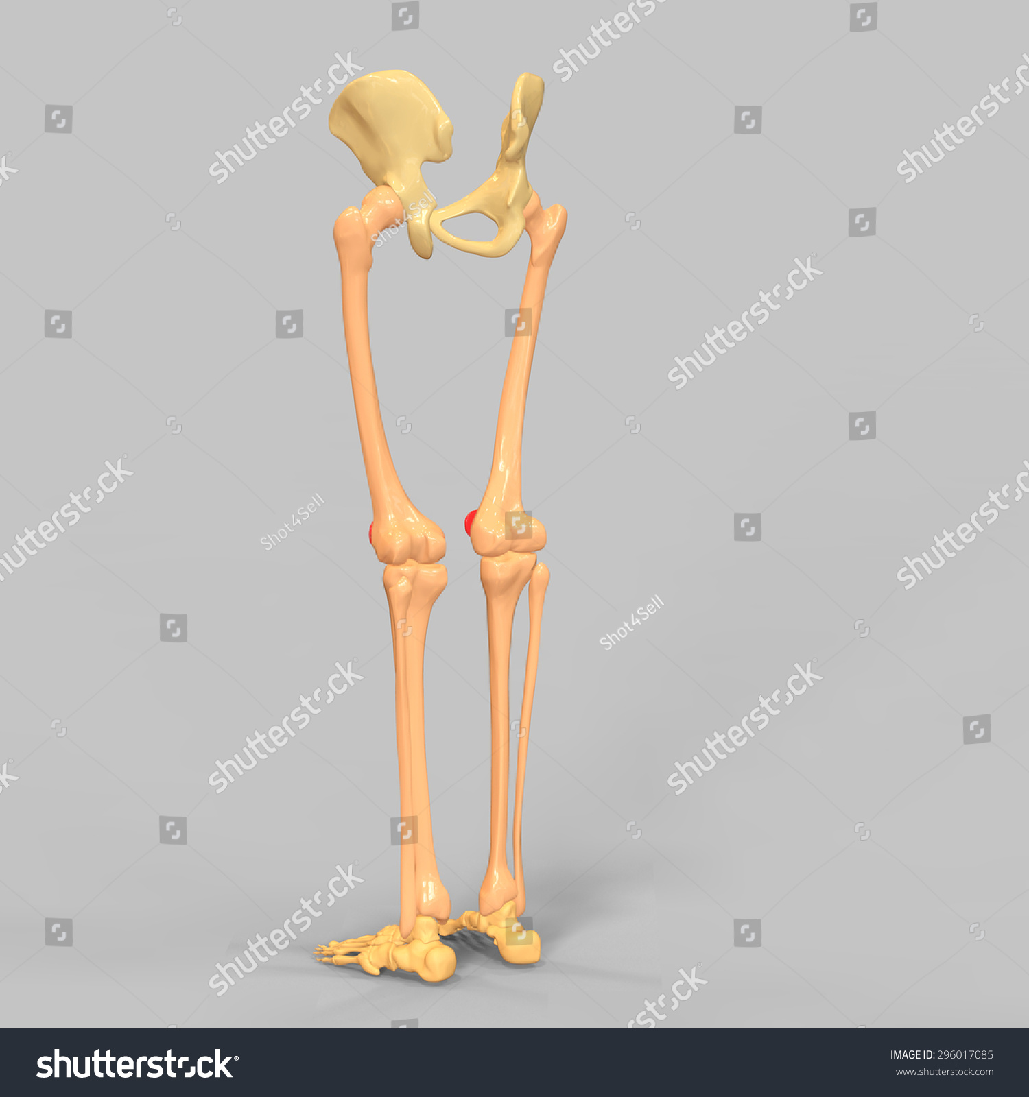 Skeleton Legs Ez Canvas