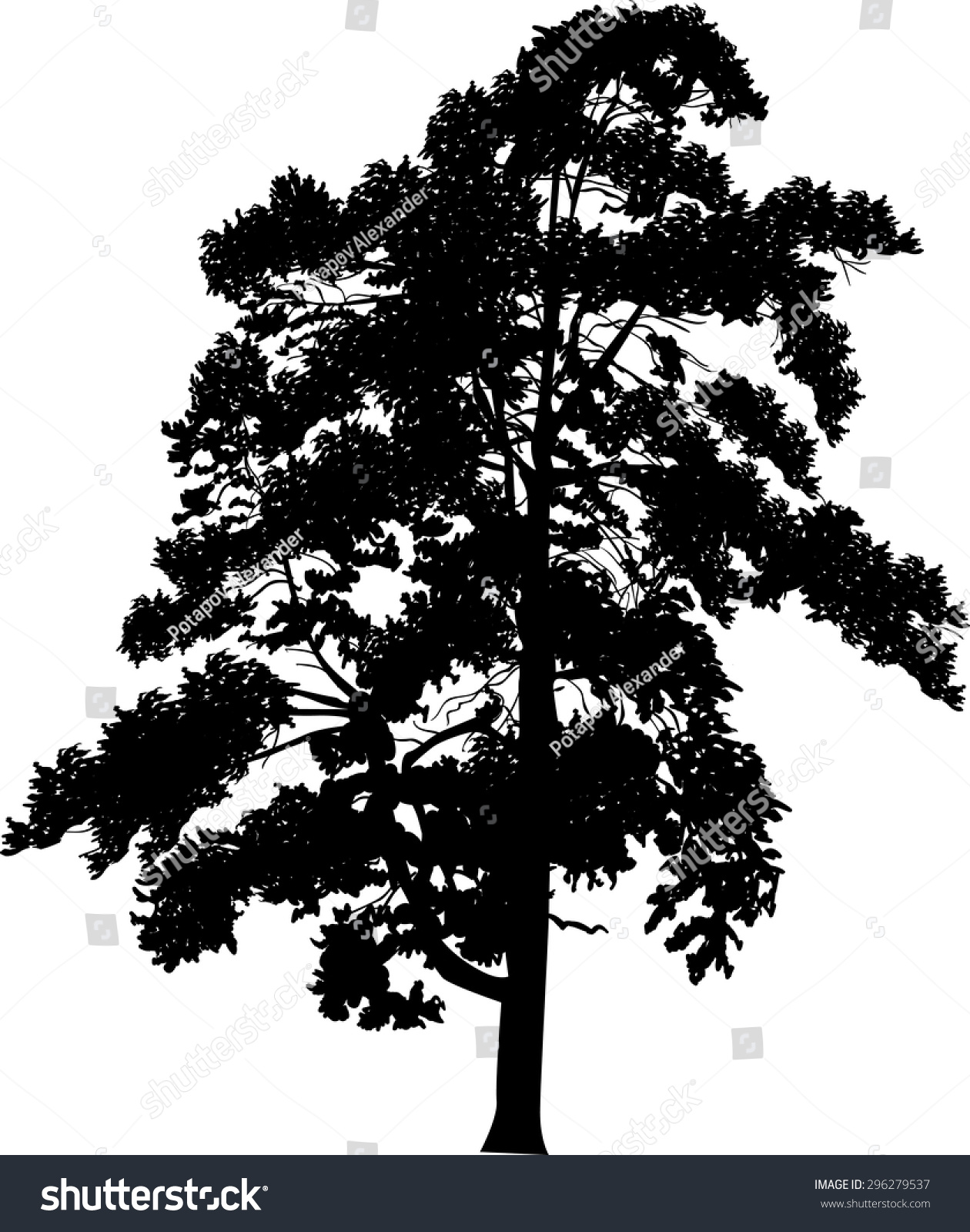 pine level black singles The pineapple (ananas comosus) is meaning pine of the indians fungal heart rot, root rot, black rot, butt rot, fruitlet core rot.