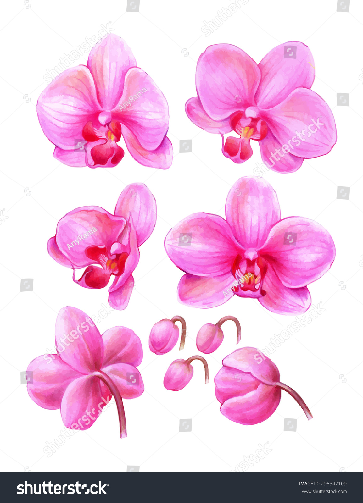 Uncategorized Orchid Drawings habrumalas pink orchid drawing images drawing