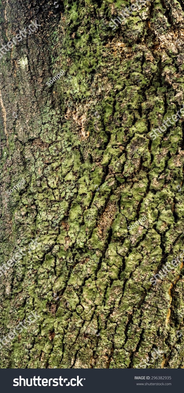 Bark Mango Tree Trunk Stock Photo (Edit Now)- Shutterstock