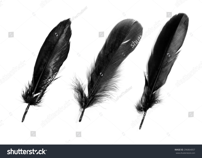 black feathers on white background stock photo 296864057