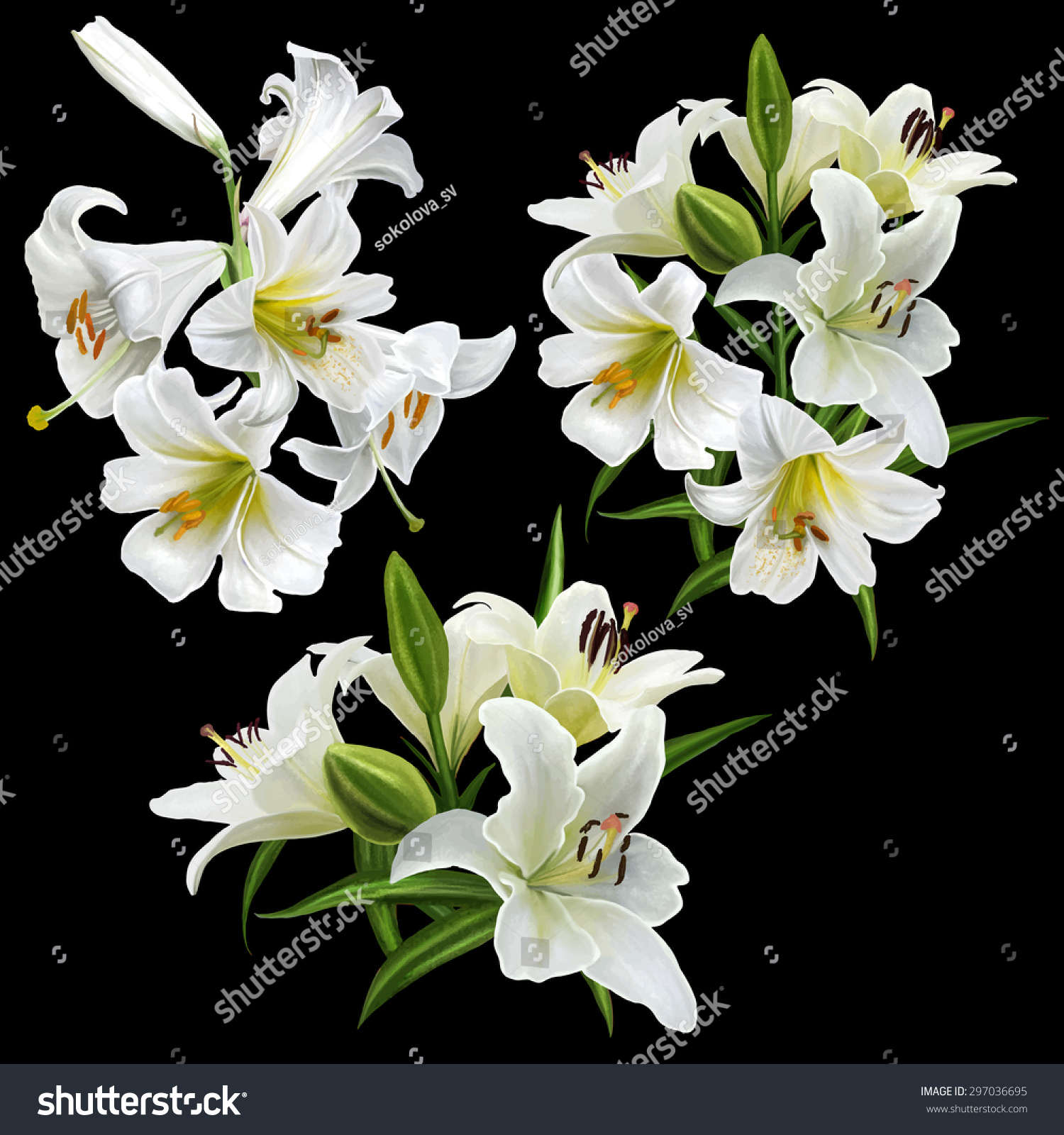 Set White Lily Flowers Isolated Stock Vector Royalty Free