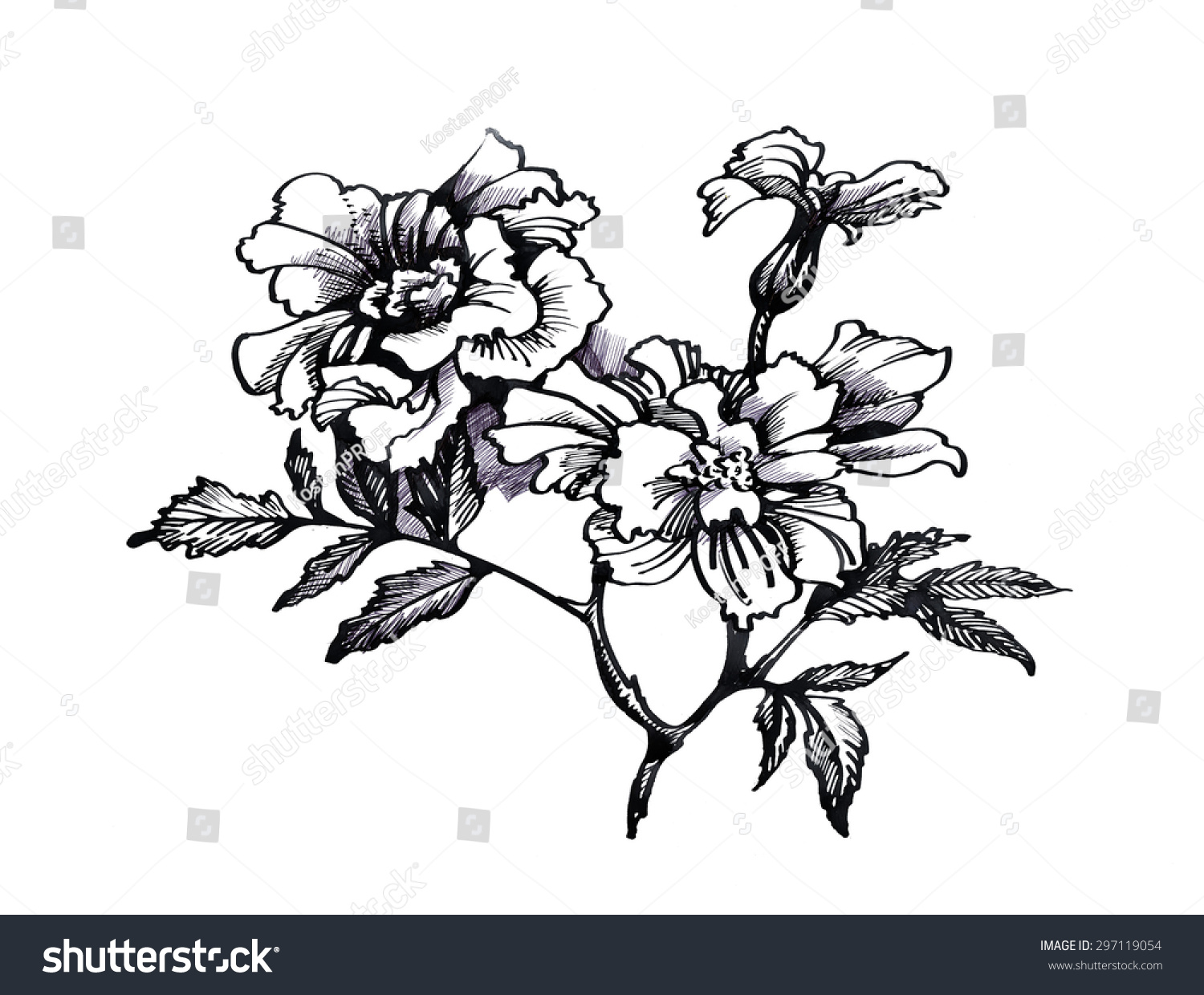 Black White Sketch Painting Beautiful Flowers Stock Illustration