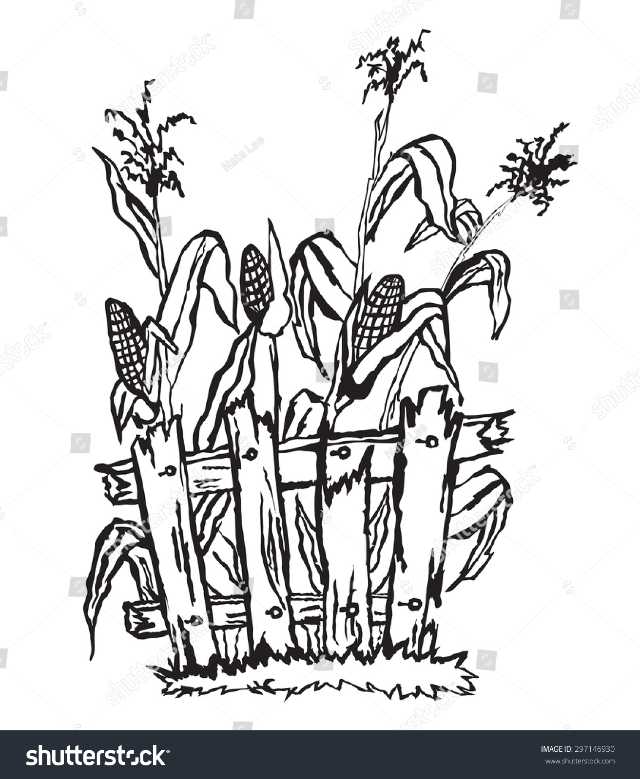 Corn Field Behind Fence Stock Vector (Royalty Free) 297146930 ...