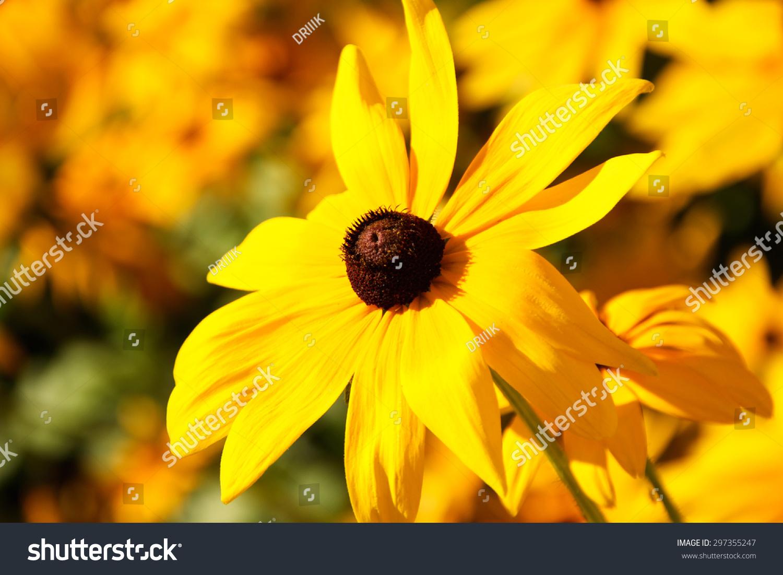 Yellow Flower Black Center Stock Photo Edit Now 297355247