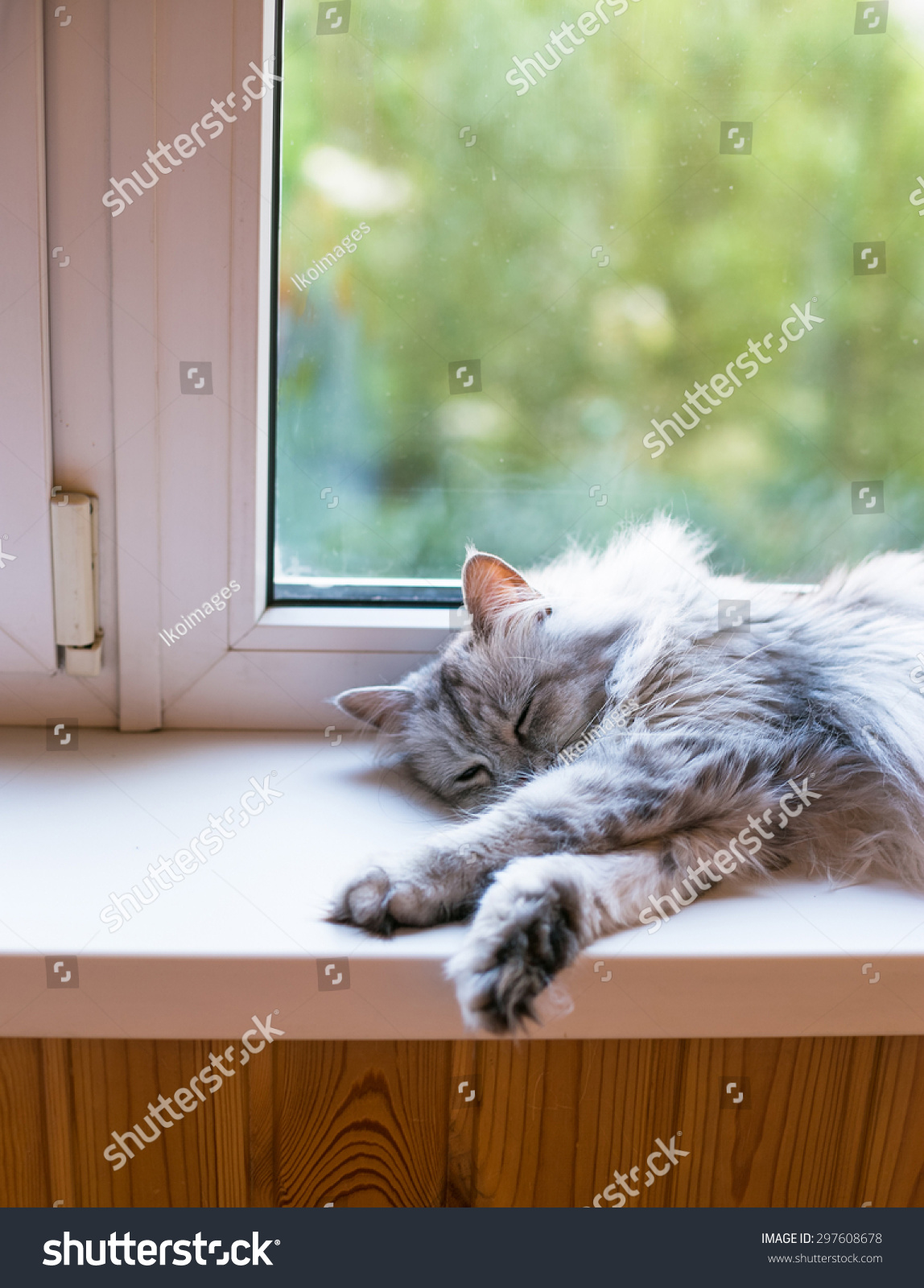 Beautiful Grey Cat Sleeping On Windowsill Stock Photo