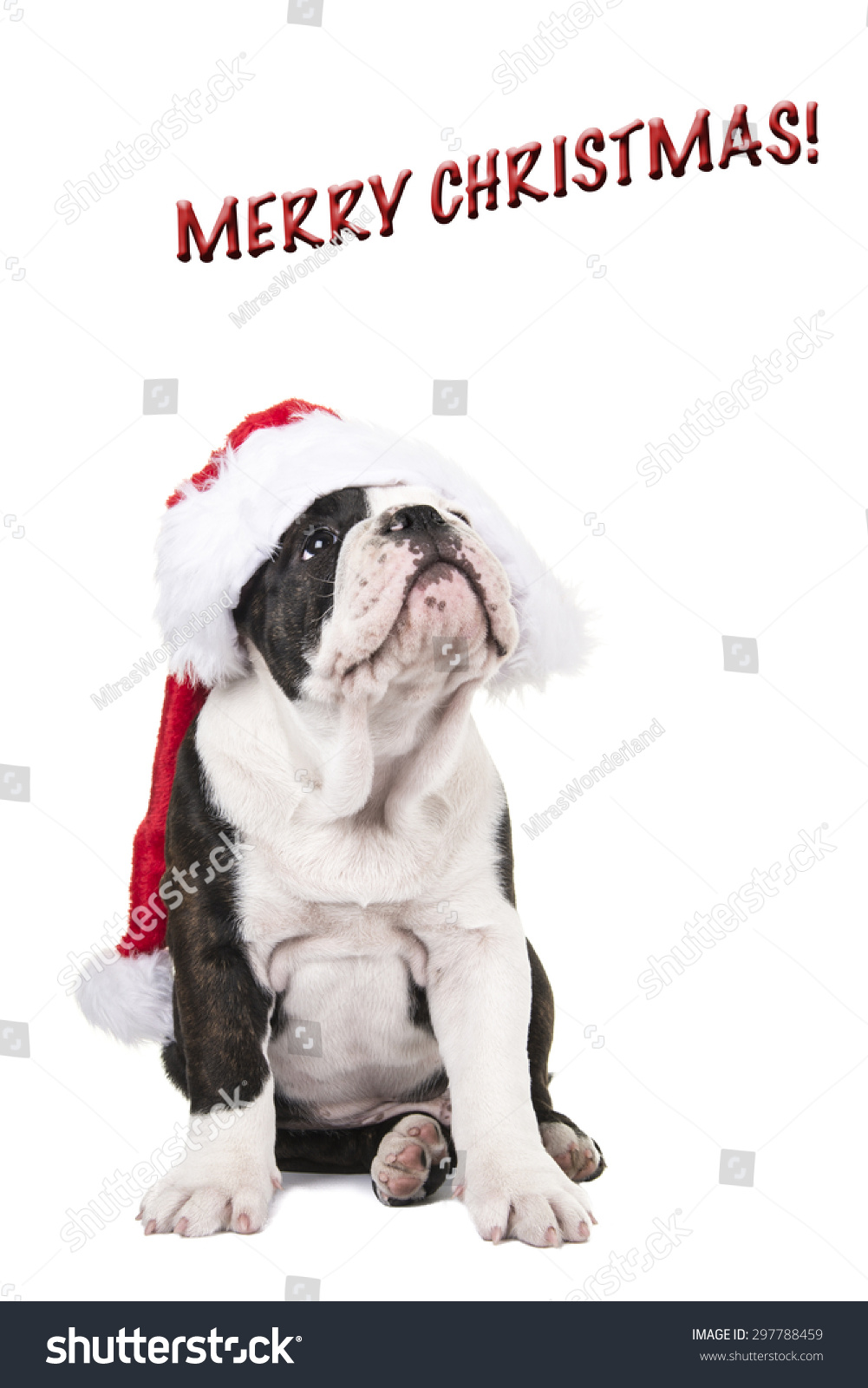 Christmas Card English Bulldog Puppy Wearing Stock Photo (Edit Now ...