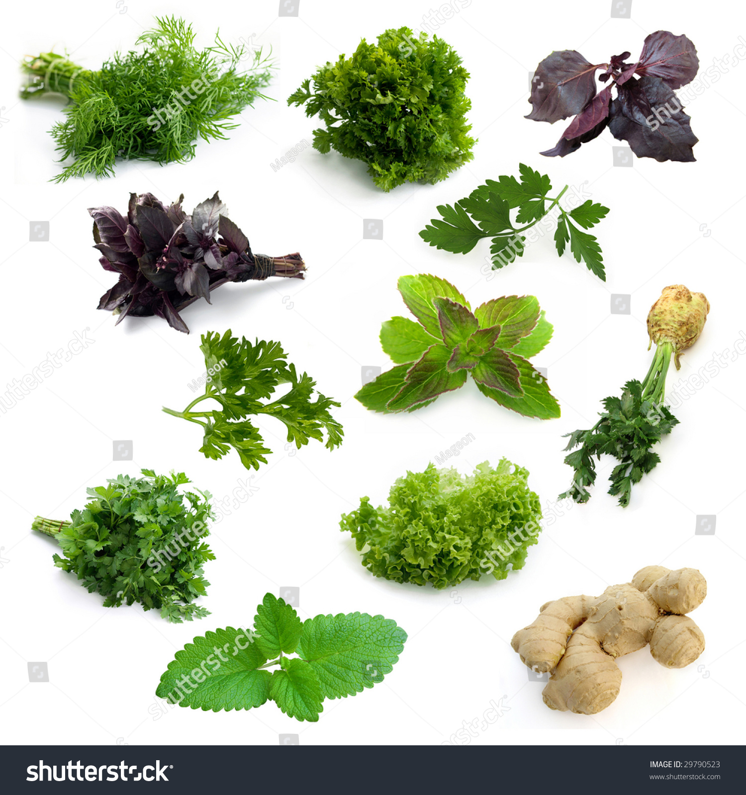 Different herbs royalty free stock image image 16265346 - Image Gallery Different Herbs Wallpaper Gallery Image Gallery Different Herbs Image Gallery Different Herbs Wallpaper Different Herbs Royalty Free Stock