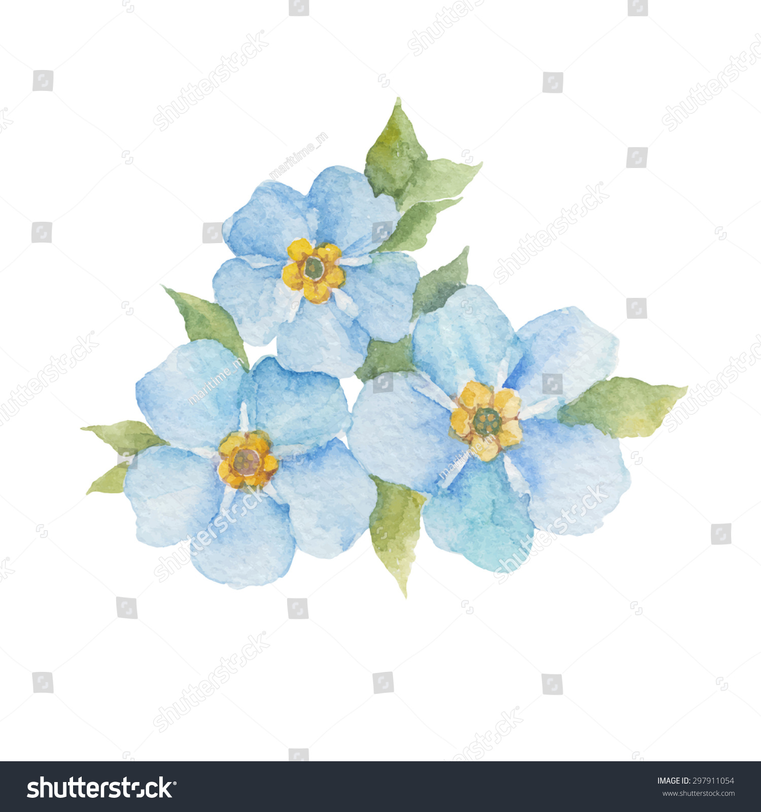 Forgetmenot Flowers Isolated On White Background Stock Vector