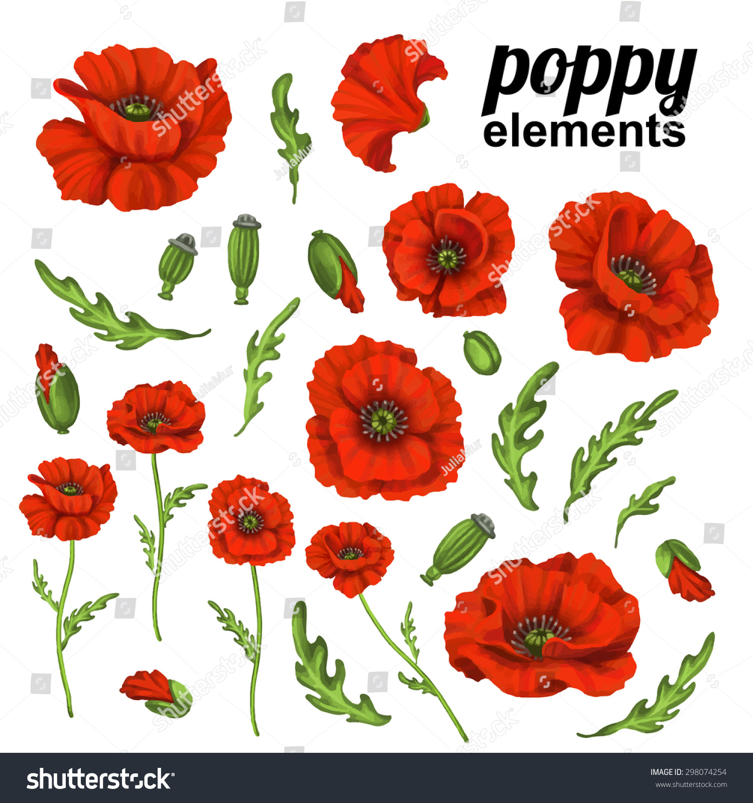 Poppy Flower Red Poppies Isolated On Stock Vector Royalty Free