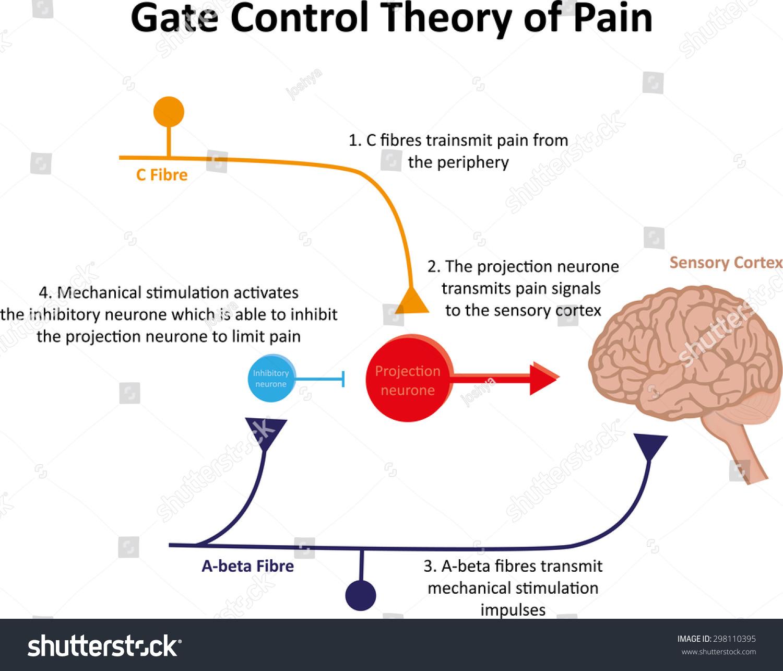 gate control theory pain illustrationのイラスト素材 298110395