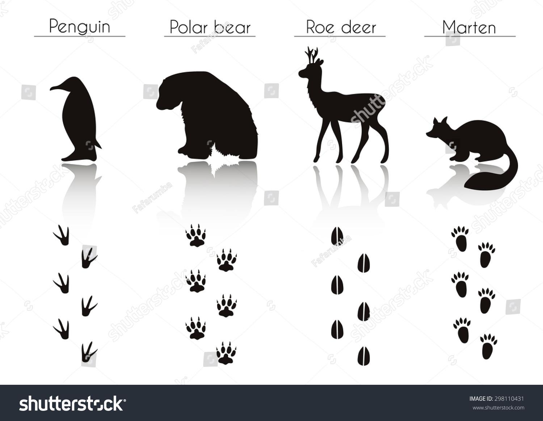 set animal bird trails name vector set stock-vektorgrafik