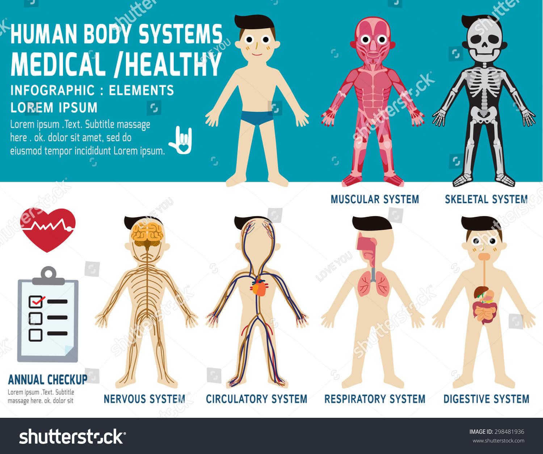 Human Body Systems Annual Checkupanatomy Body Stock Vector (Royalty ...