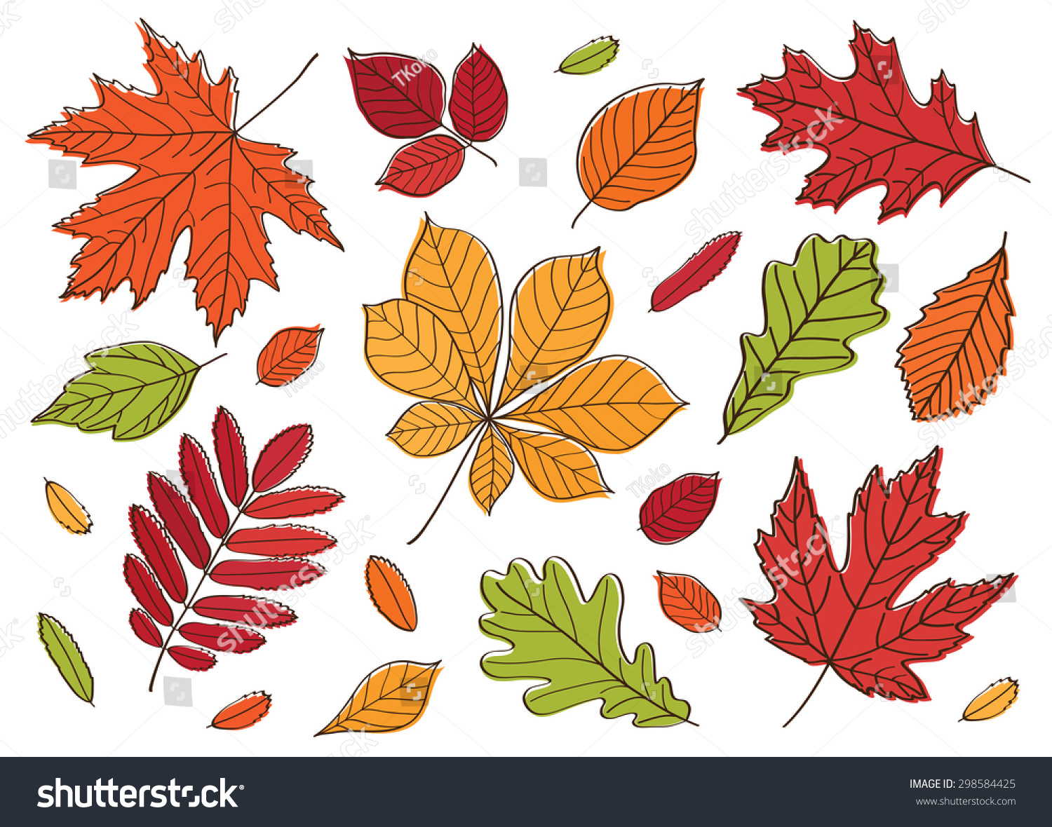 big set images leaves different trees stock vector 298584425