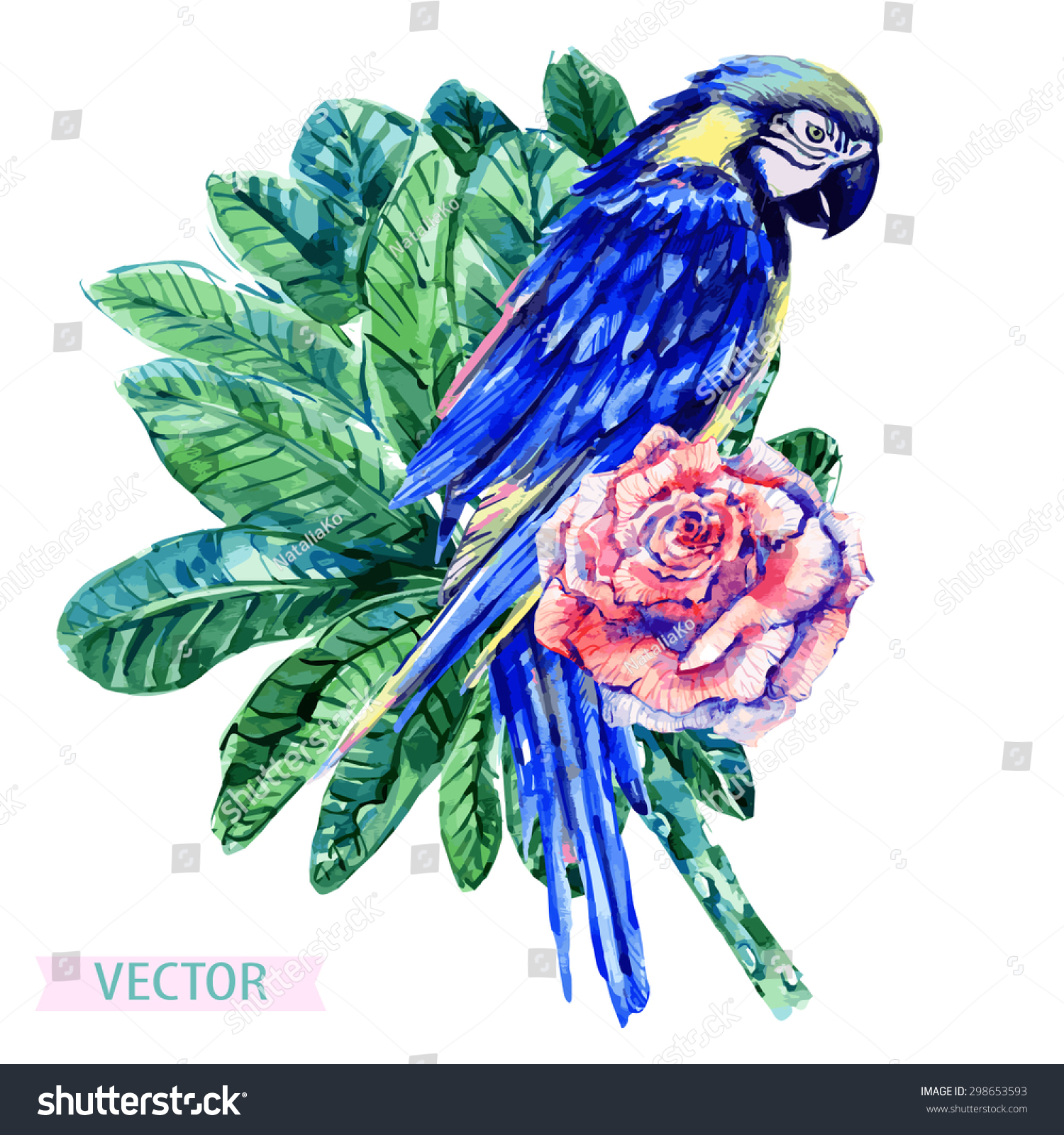 Dhak Tree Information Stock Vector Watercolor Parrot Flower And Tropical Jungle