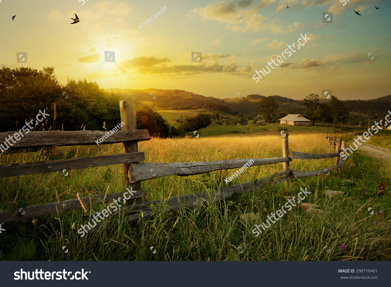 art rural landscape. field and grass  #298710401