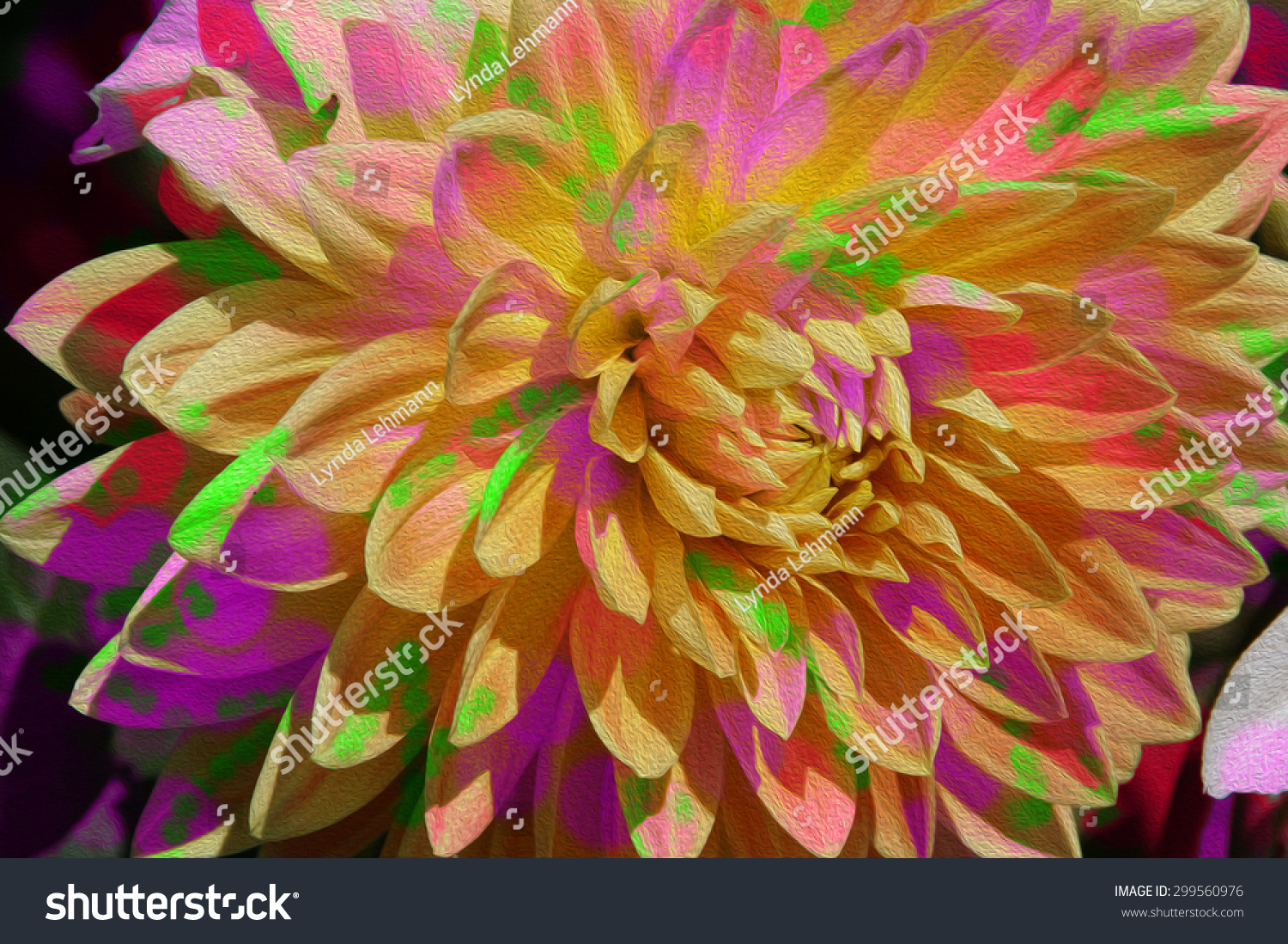 This Fall Chrysanthemum Altered Into Several Stock Illustration